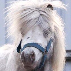 pony-claus
